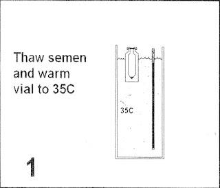 B1. Ngâm thuốc trong 35-37 độ C, giải đông cọng rạ như bt