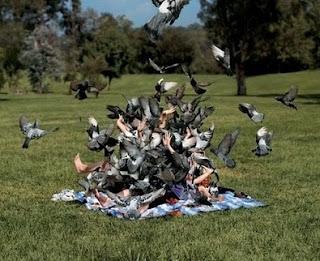 Piquenique - Ataque de pombos