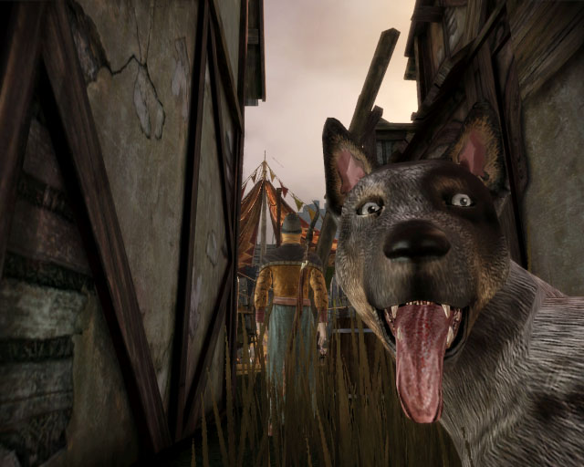 Dragon Age Origins dog