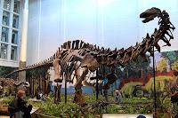 Apatosaurus Statue Model