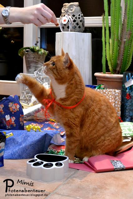 Mimi bekommt zu Weihnachten Leckerchen geschenkt