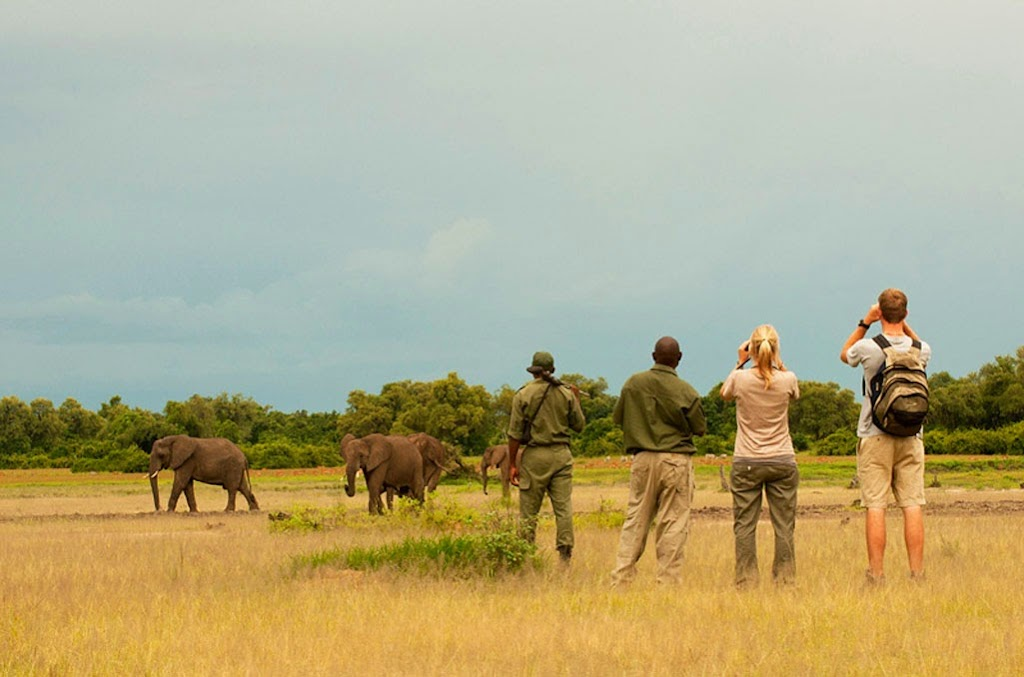 Guided Walking Safari in Africa. Elephant Sightseeing