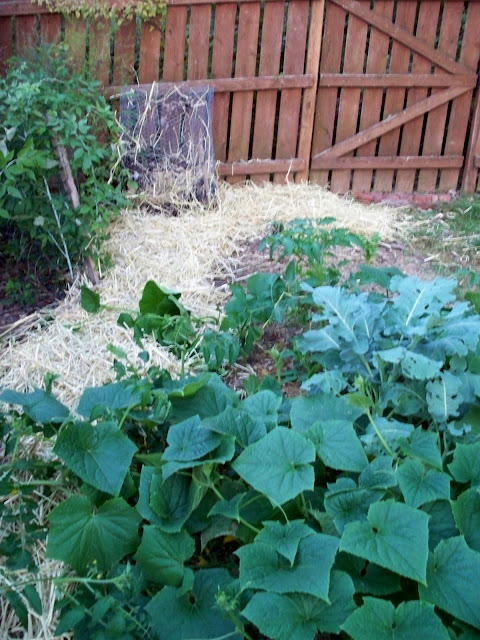 garden with fresh mulch and compost pile