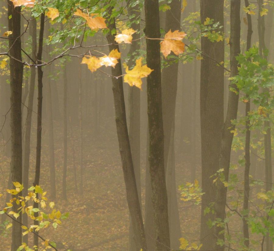 woods trees woods