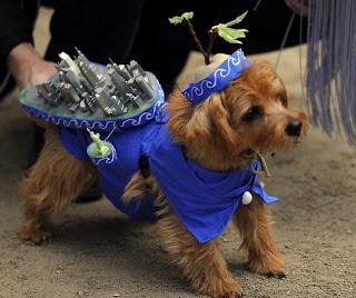 Pakaian Anjing, Keren, Menarik