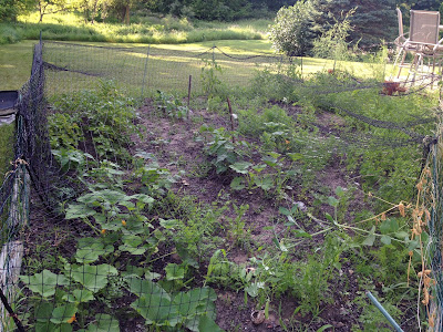 vegetable garden, with fencing and netting