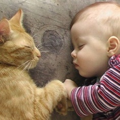 Cat and a Baby Sleeping pictures