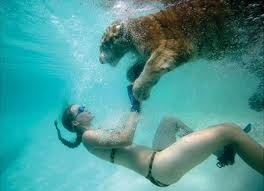 Swim with a Tiger