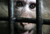 Animais também têm consciência, dizem neurocientistas