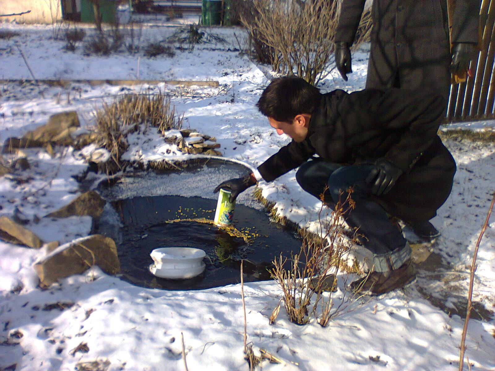 Tq7 weblog haben denn die fischlis berlebt for Goldfische gartenteich winter