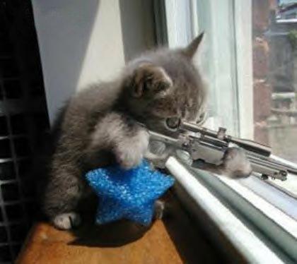 Gracioso gato francotirador