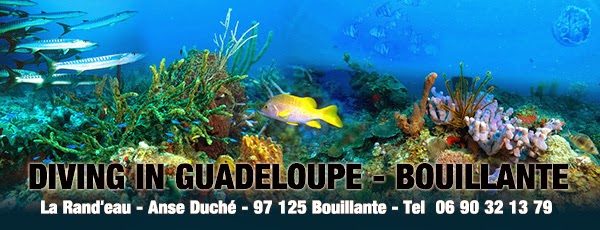 Diving in Guadeloupe