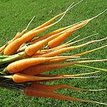 Cenoura faz bem pra quê?