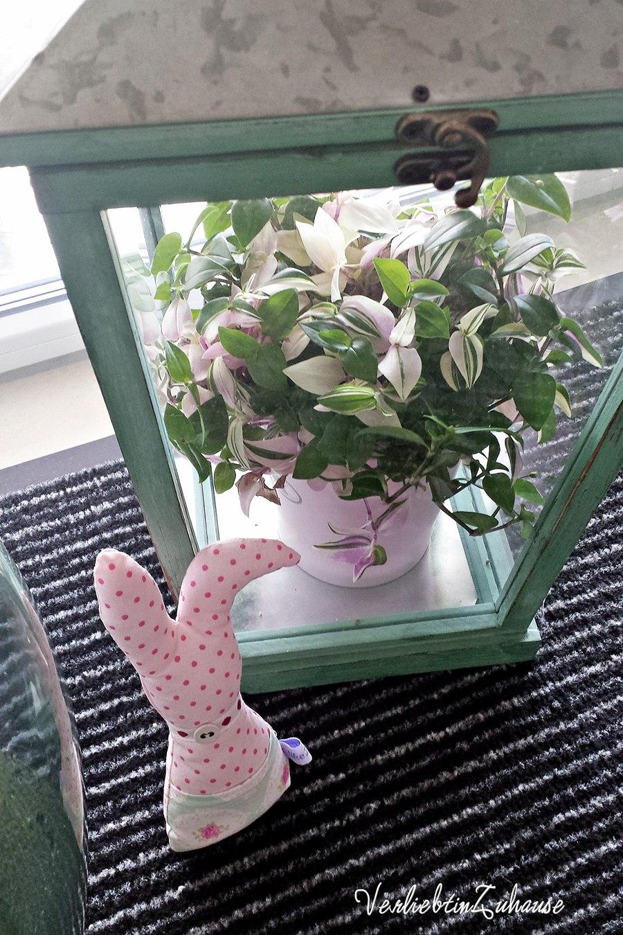 Rosa panaschierte Grünpflanze in Laterne mit Osterhase davor