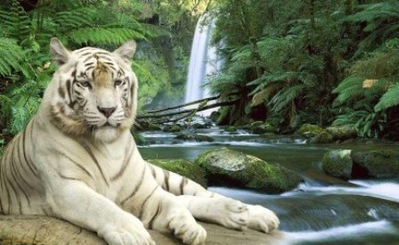 My box wallpapers download free white tiger high quality - White tiger wallpaper free download ...