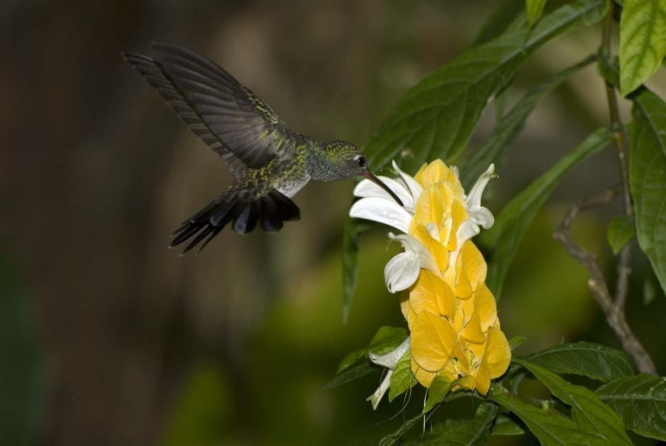 Amaranta Casa de Colibríes: Las Flores de los Colibríes