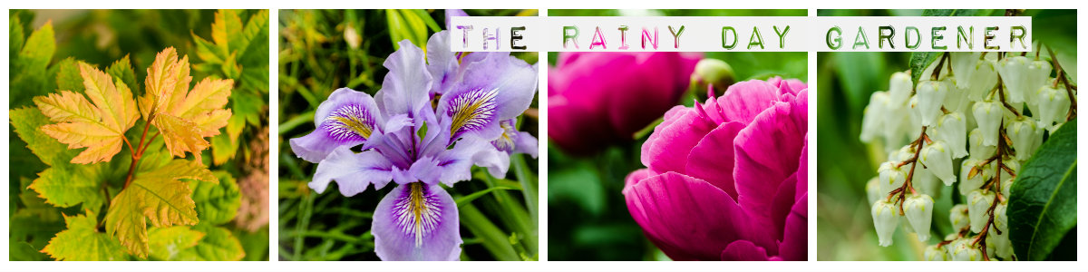 The Rainy Day Gardener