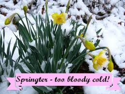 Cold spring flowers in the snow