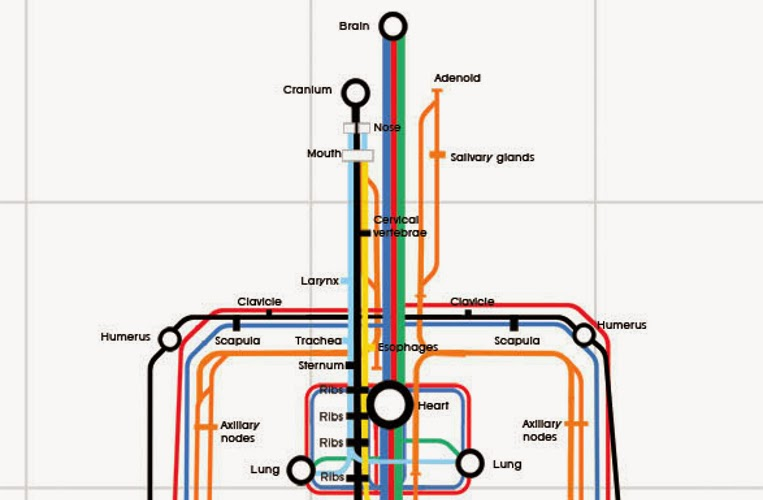 02-Sam-Loman-Illustrator-Graphic-Designer-Human-Body-System-as-Subway-Map-www-designstack-co
