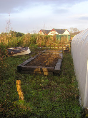 polytunnel, veg growing