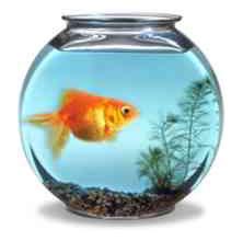 Los recuerdos de mi familia y mi barrio sta caterina 38 for Peceras con peces