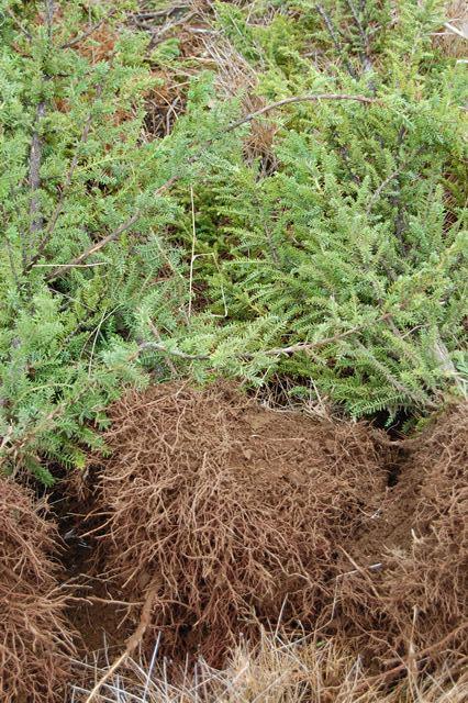 Vivero bosques del sur c mo elijo una buena planta nativa for Caracteristicas del vivero