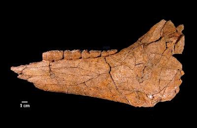 Ice Age horse fossil found near Las Vegas