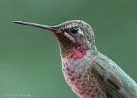 I love birding!