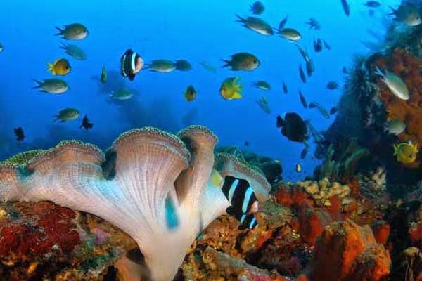 Tempat Snorkeling di Bali