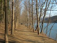 http://1.bp.blogspot.com/--9w8998H7n4/T75TBpoIpnI/AAAAAAAAAhM/KZQ4wKDfhvo/s1600/Nami-Island-Korea-Winter-Sonata-4.jpg