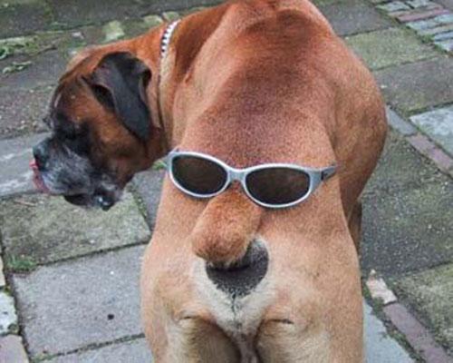 Las fotos de perros más divertidas