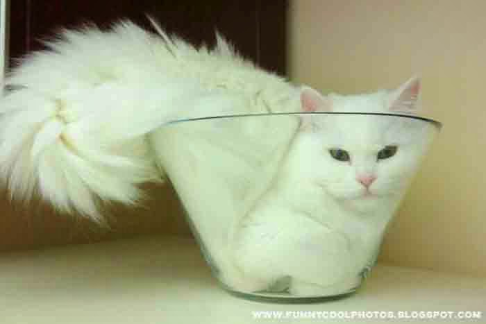 Cats become Liquids