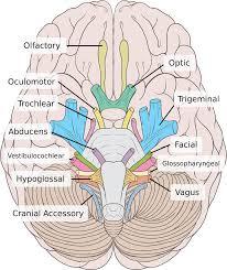 Tips Memperbaiki Kinerja Otak Anda