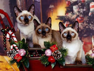 Postal navideña con tres gatitos muy lindos