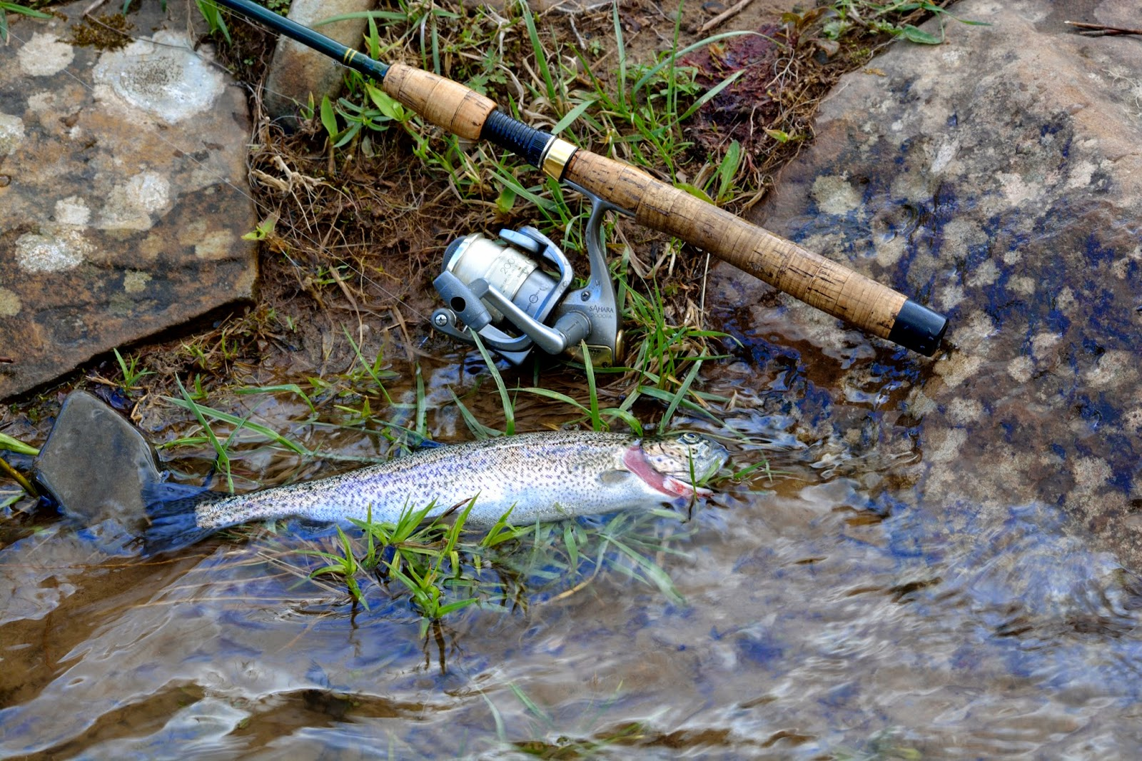 Wv Daily Trout Stocking Report 116