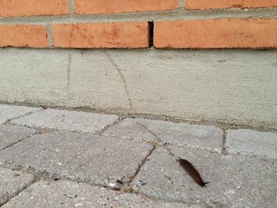 siput babi seks sayang neelofa