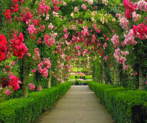 Rose garden home ideas for Garden design with roses