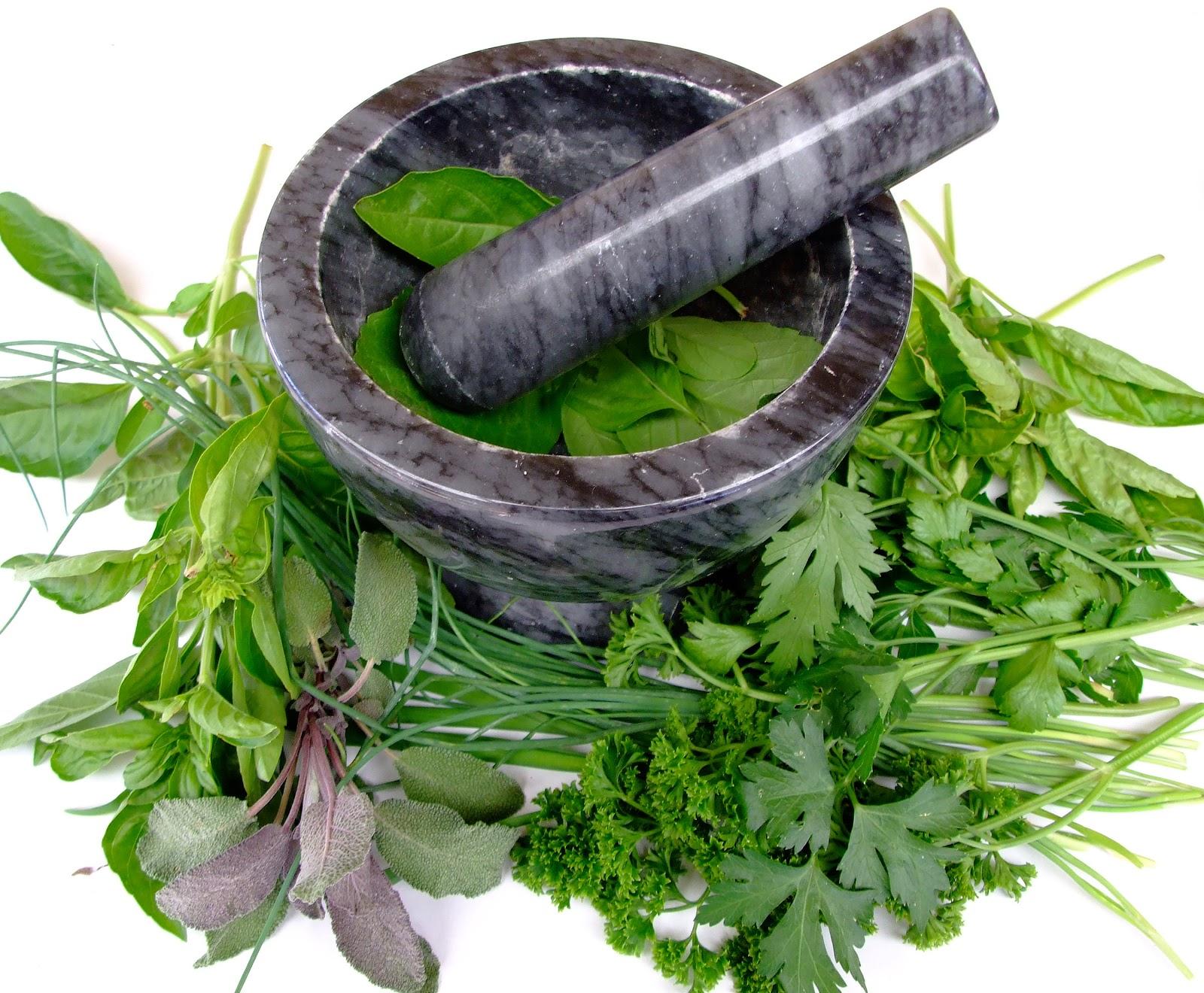 Puerta de emergencia hierbas medicinales for Hierbas y plantas medicinales