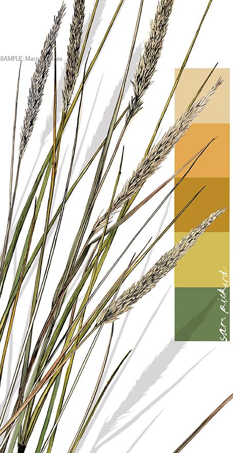 colour from the season marram grass cream - Season Pictures To Colour
