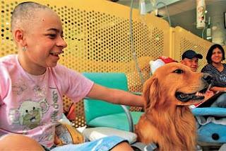 retrata caras, zooterapia, cães e crianças
