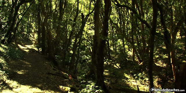 Parque Nacional Garajonay (La Gomera, Canarias)