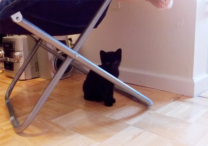 Baby Black Kitten Cat