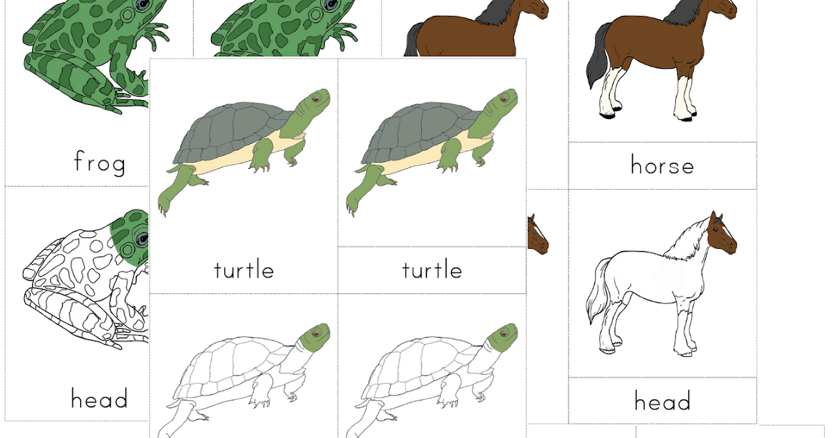 zoology montessori Our favorite montessori materials are zoology puzzles the puzzles teach a hands-on approach for the five main montessori classes of vertebrates.
