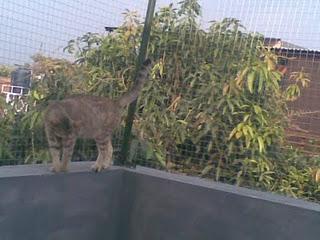 Gambar 6. cat playground