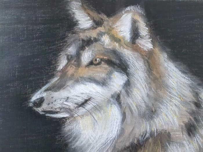 copia de una foto de un lobo con pastel y acrilico