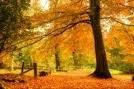Ya Tuhan, kurniakan kami ketenangan fikiran dan jiwa...