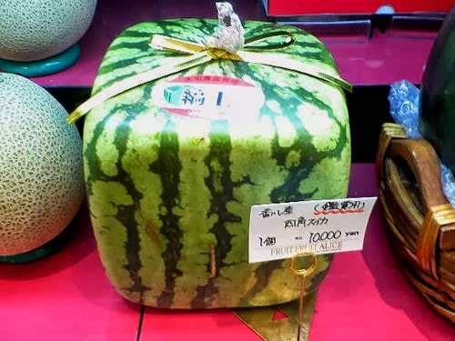 Square watermelons 24 hours of culture - Square watermelons how and why ...
