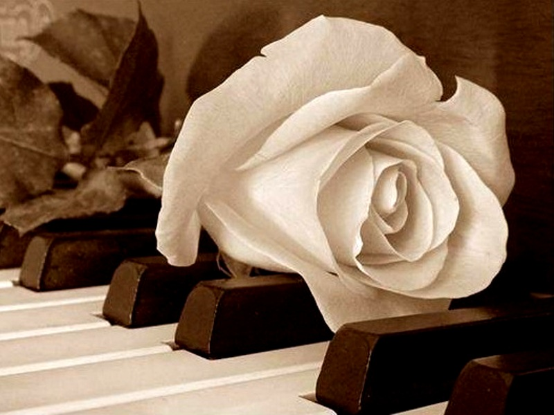 White Rose On Piano