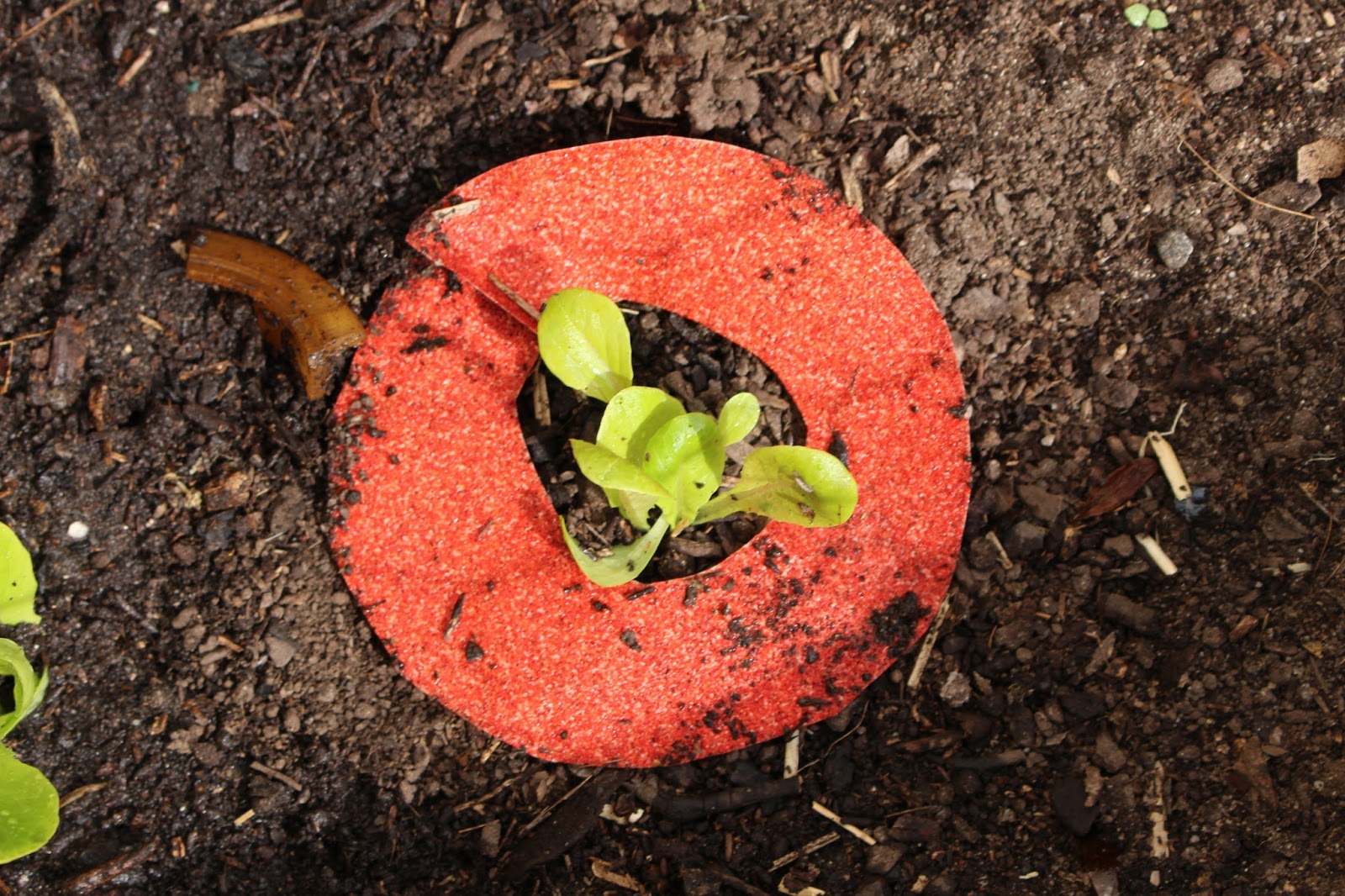 snail repellent, sandpaper donuts