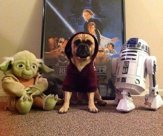 star wars pet costume-3